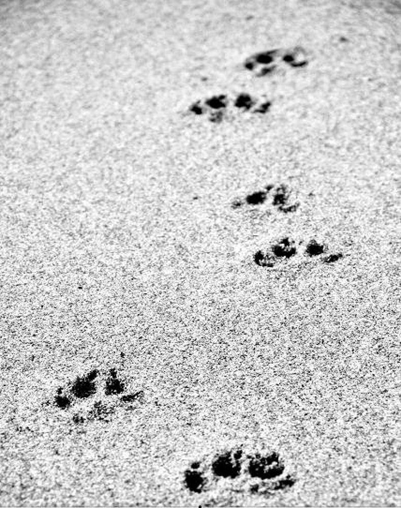 foot.jpg by photograffer