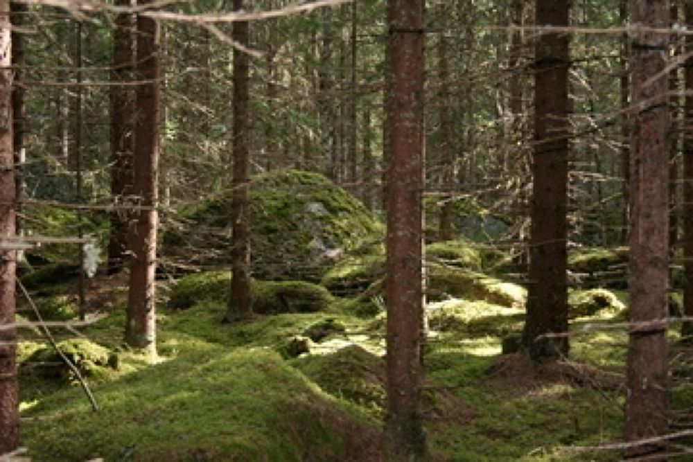 swedes wood by pererik22