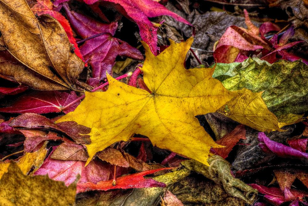 Autumn Colors by Rob van der Griend