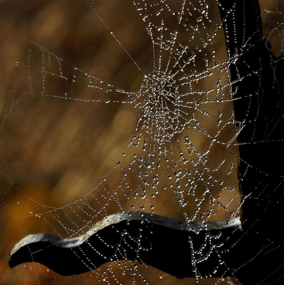 Cobweb by Rob van der Griend