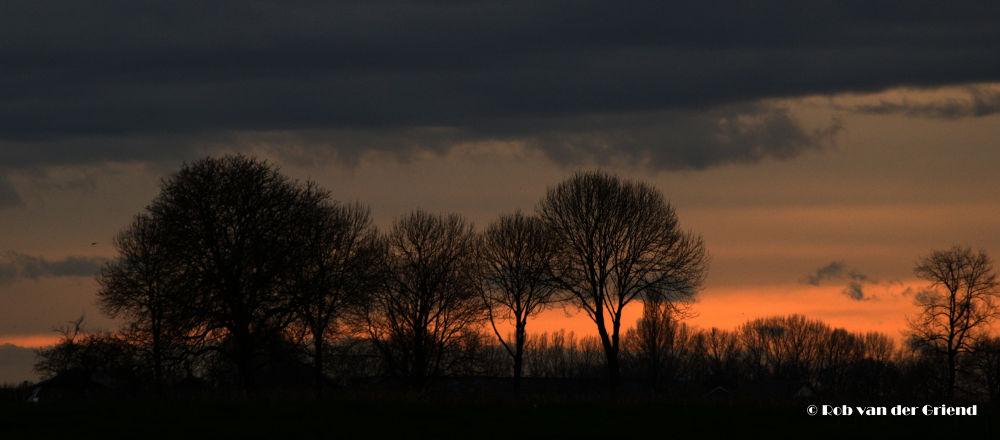 Treeline at Sunset by Rob van der Griend