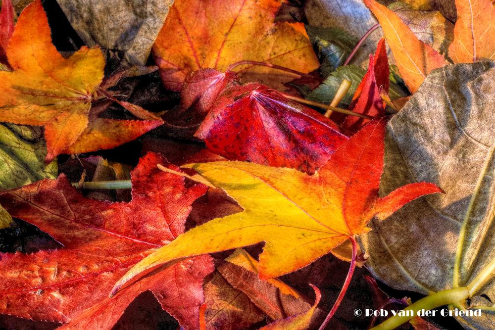 Autumn Carpet by Rob van der Griend