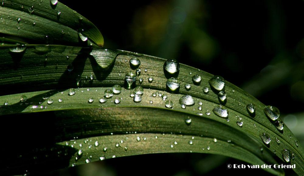 After the Rain.... by Rob van der Griend