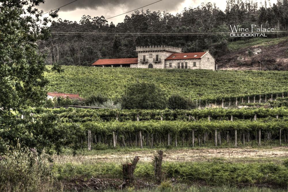 Wine Palace by OlloDixital
