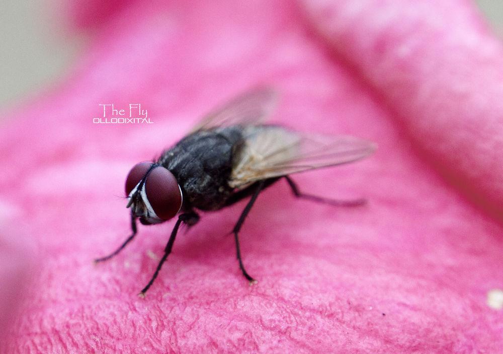The Fly by OlloDixital