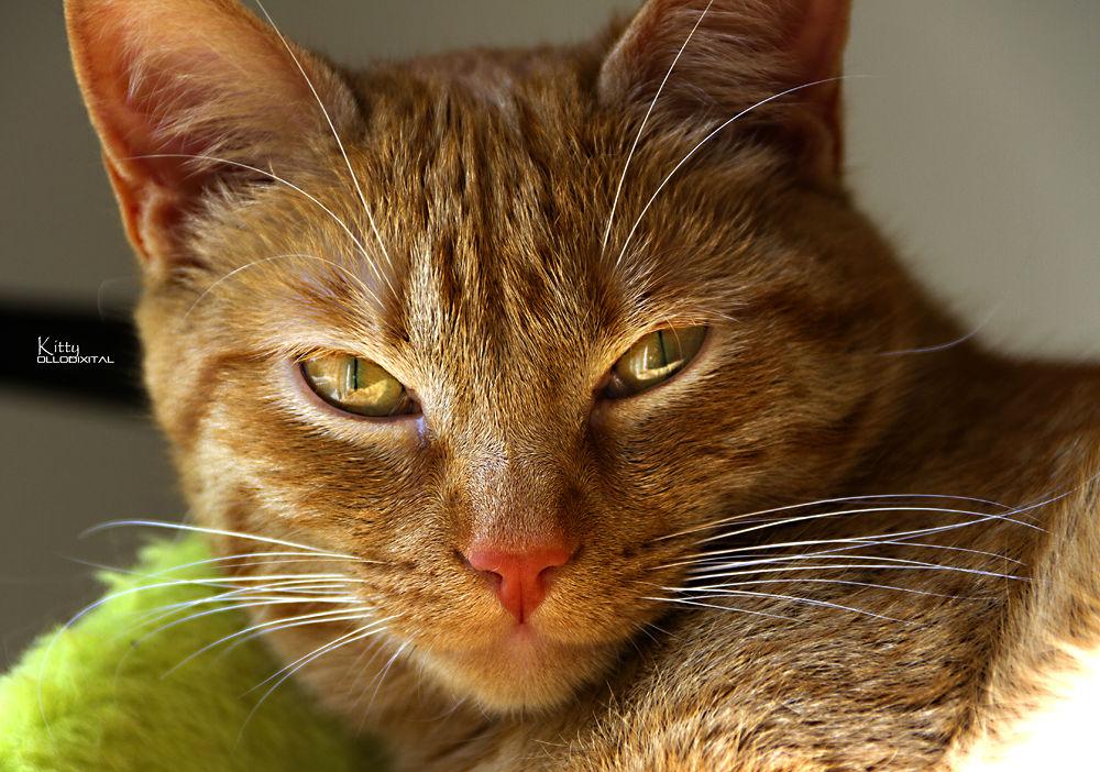 Kitty's Portrait by OlloDixital