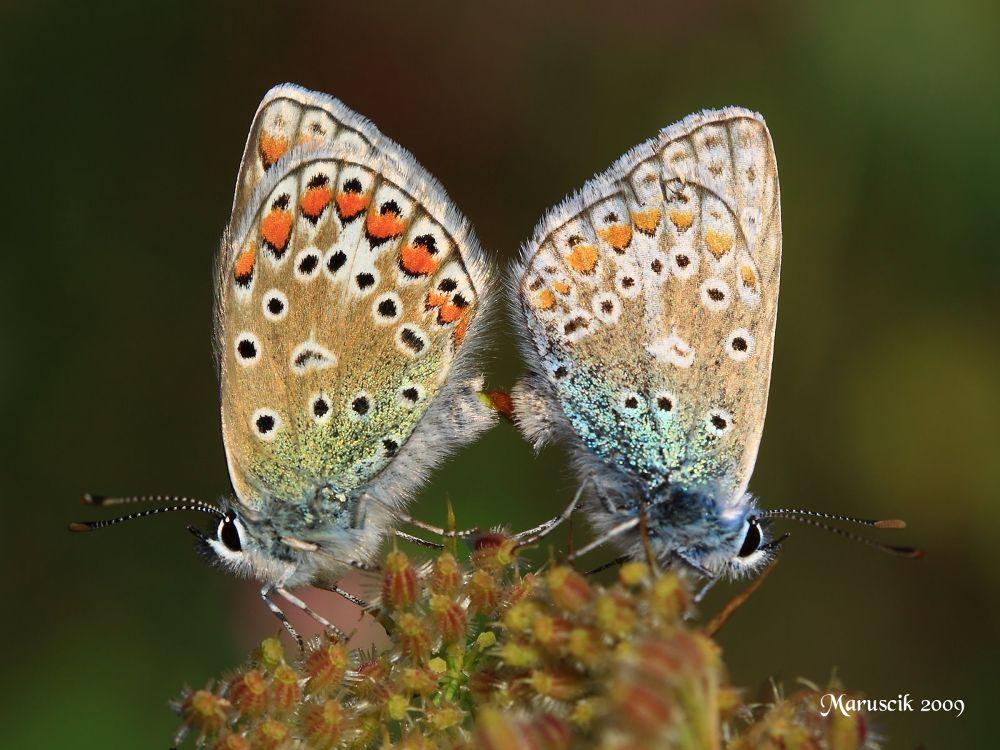 I'm feeling butterflies... by Maruscik_Photography