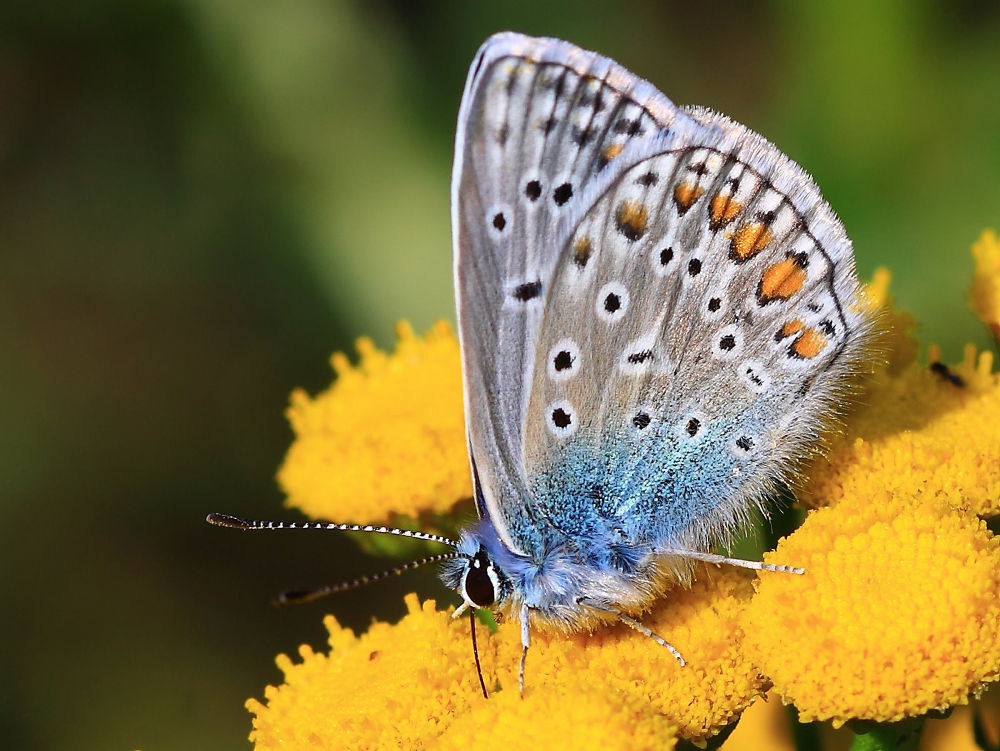 Photo in Nature #maruscik #butterfly