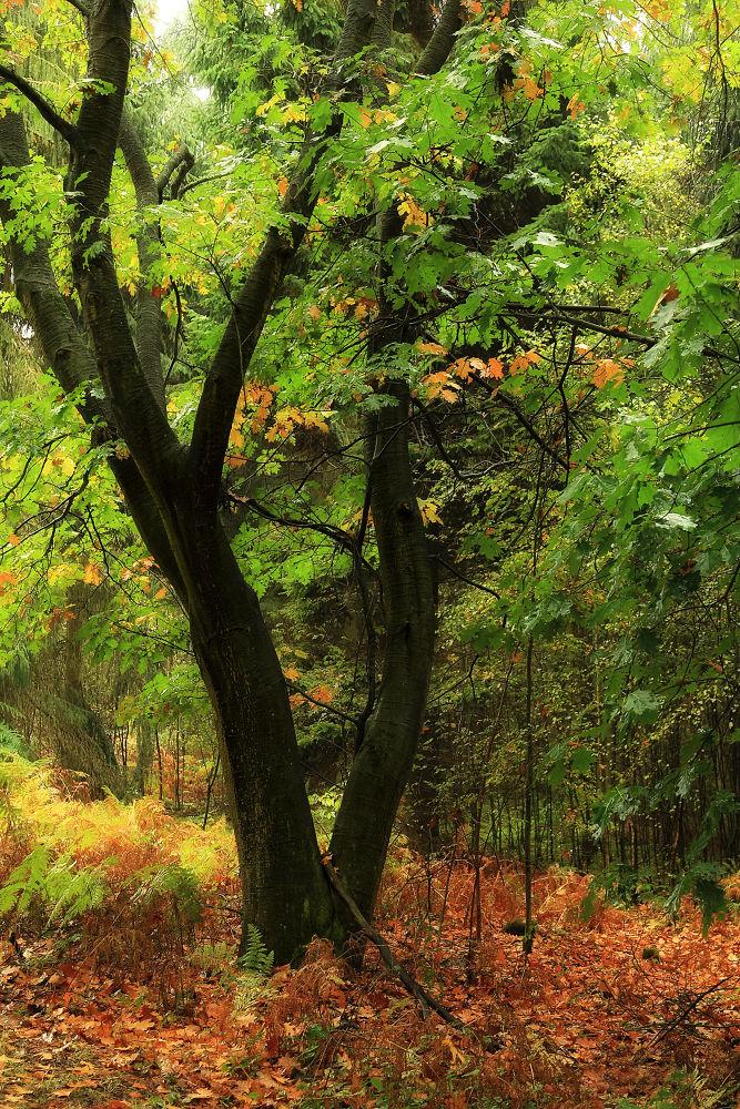 Rainy fall colors by Maruscik_Photography