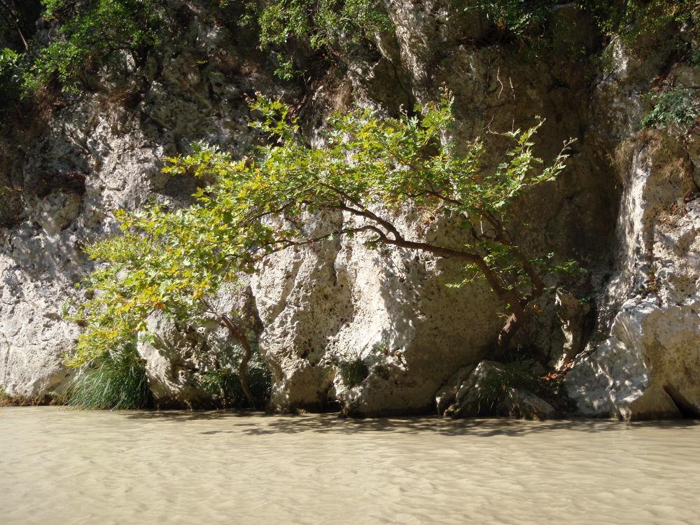 Photo in Random #parga #acherontas river