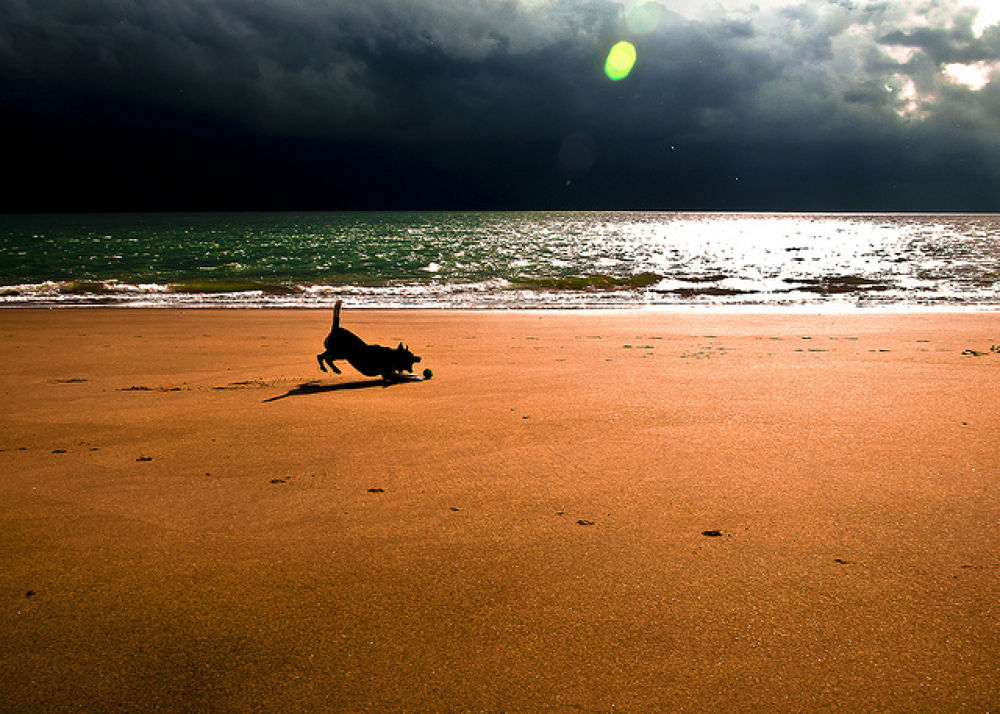 BEACH DOG by Sonja Pixels