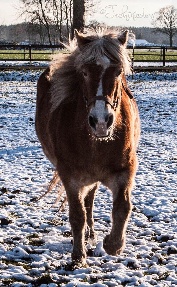 Horse by TechnicolourPhotography