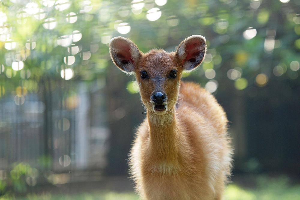 sweet deer and boke by syahrulramadan