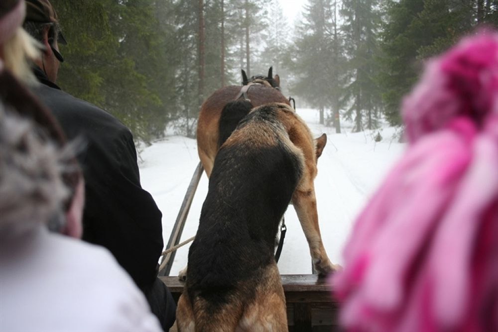 Horses Hund by pererik22