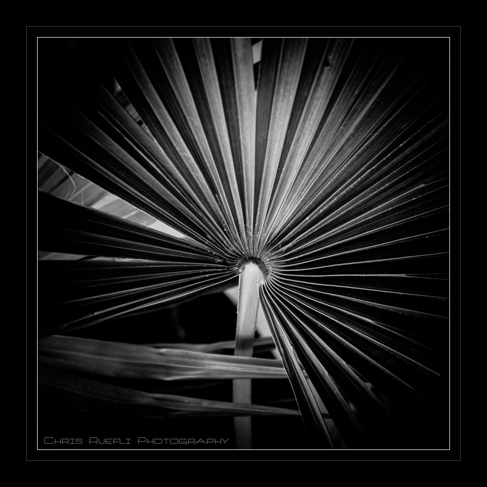 Palmleaf by chris-ruefli-photography.com