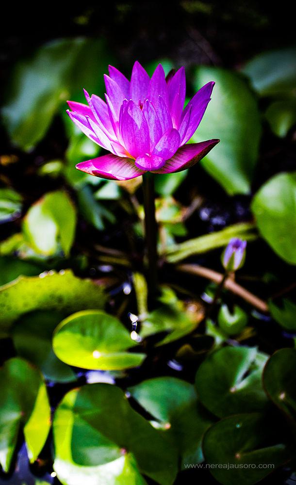 fleur.jpg by nereajausoro