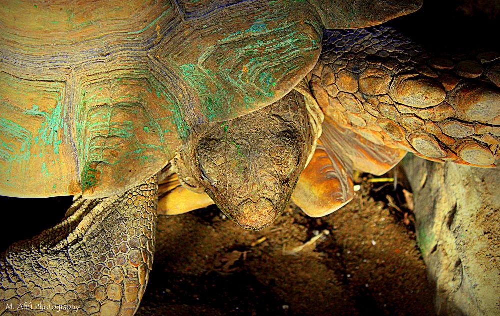 Turtles by M. Afifi