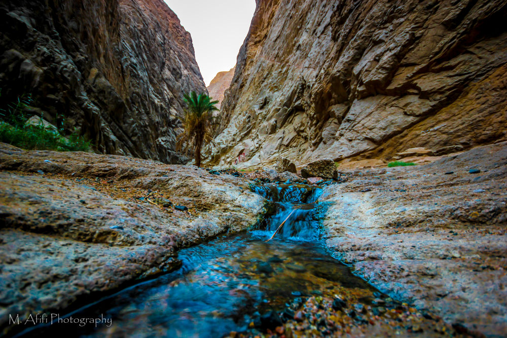 Moses springs by M. Afifi