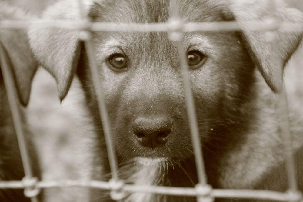 Fenced innocence by Krishnan Vaitheeswaran