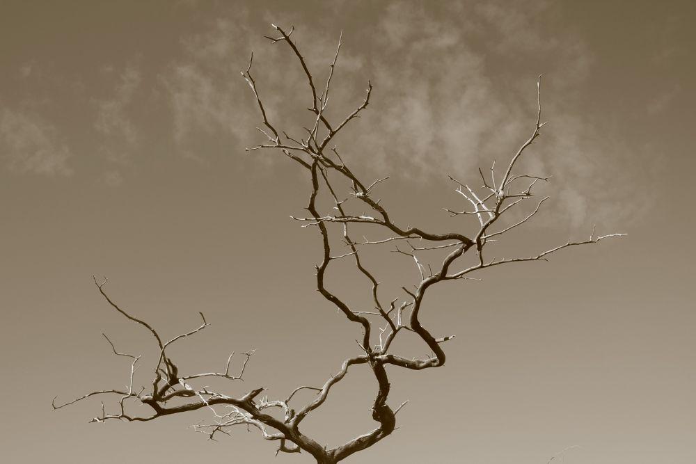 Sans leaves by Krishnan Vaitheeswaran