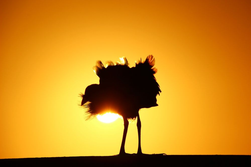 Sunbathing by Krishnan Vaitheeswaran