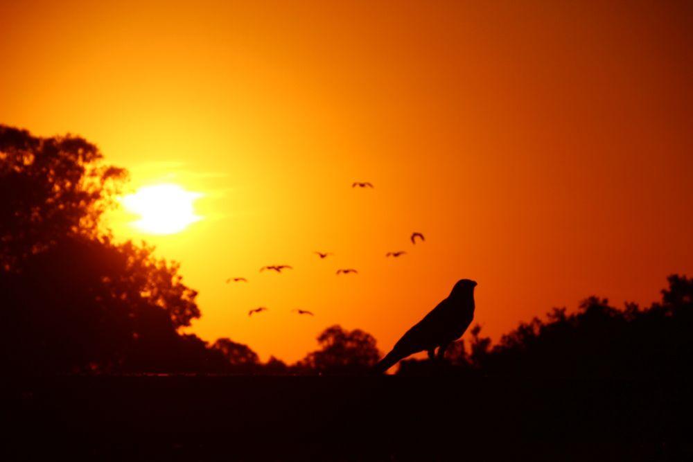 Last bird sitting by Krishnan Vaitheeswaran