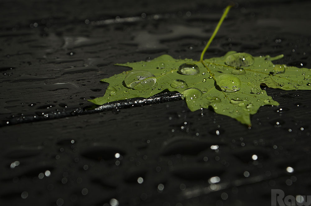 Leaf by JuanCarlosSilvaPhotography