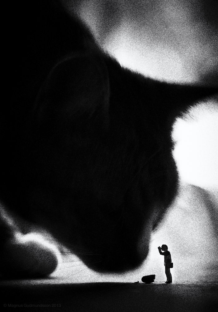 Photo in Black and White #cat #photographer #miniature