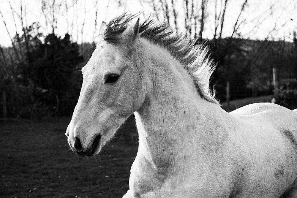 Horse portrait by AlexSharp