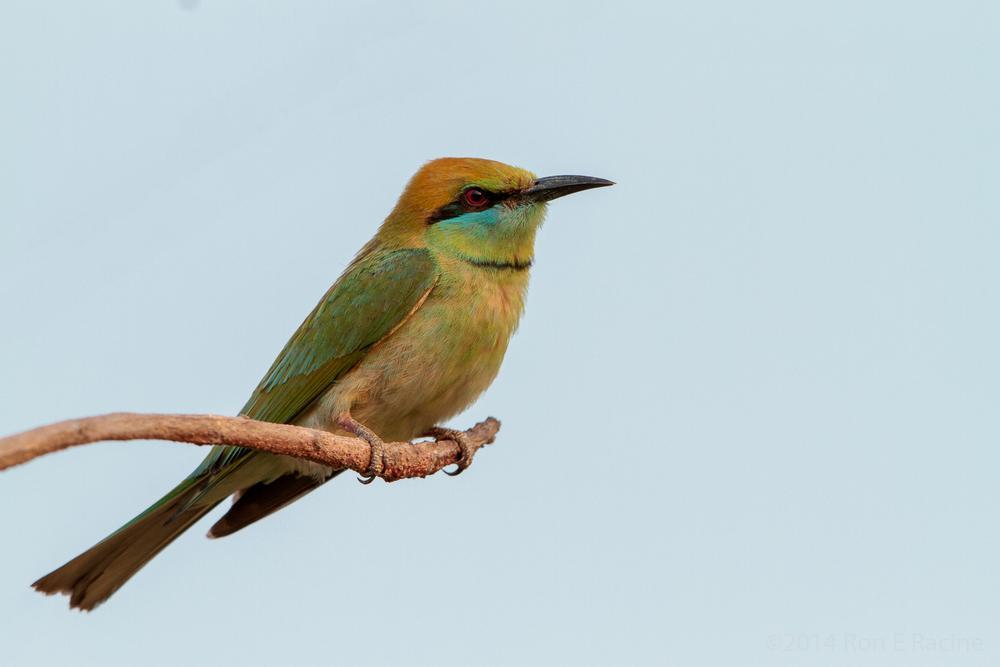 Photo in Animal #bird #nature #thailand #wildlife #animal