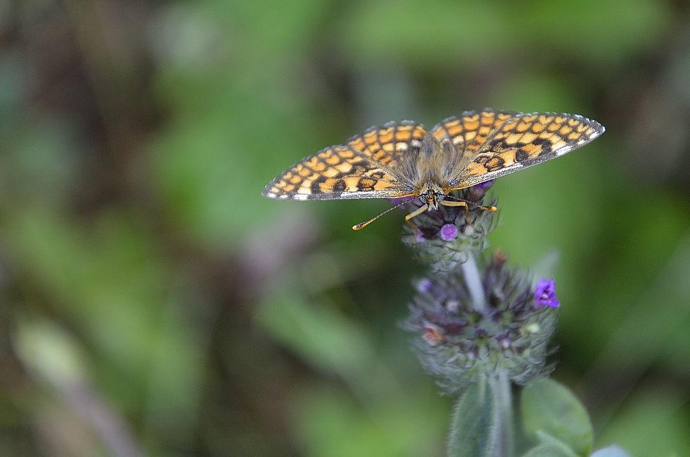 mariposa by fotografialola