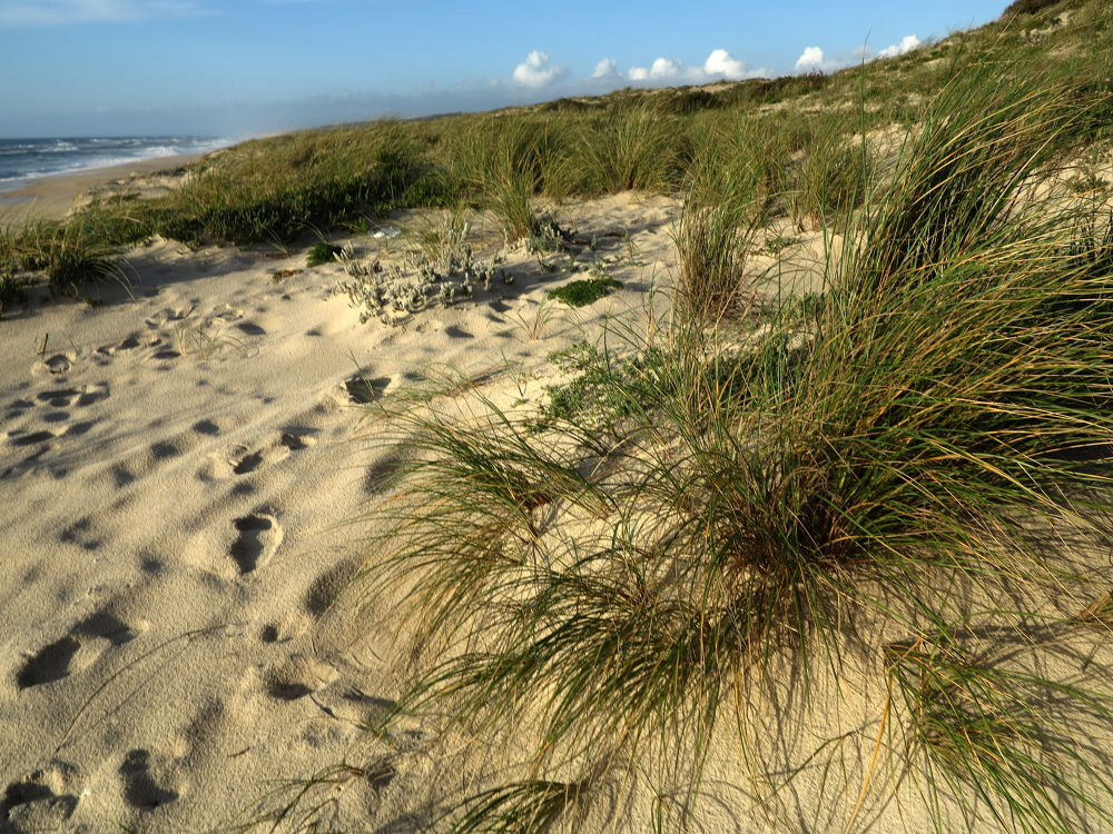 Green dunes by GilReis