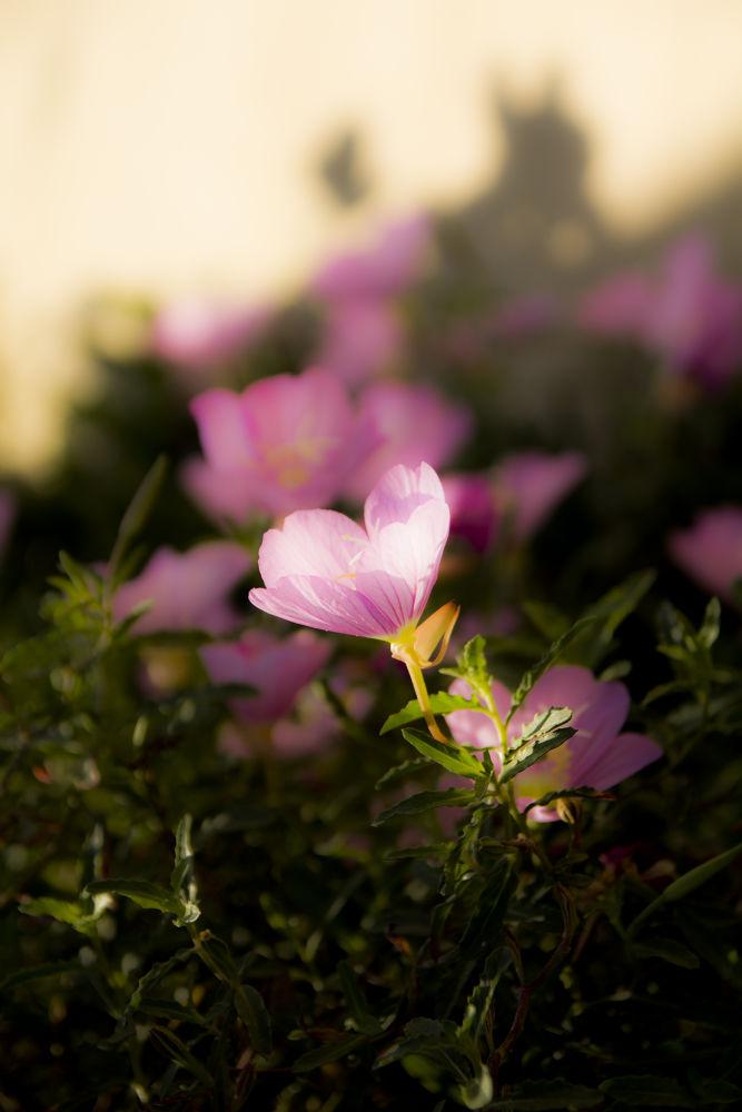 spring 3 by ronhahamo