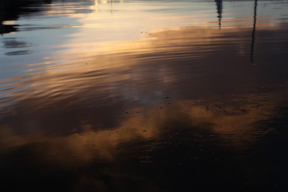 IMG_6369 by BernArt Photography