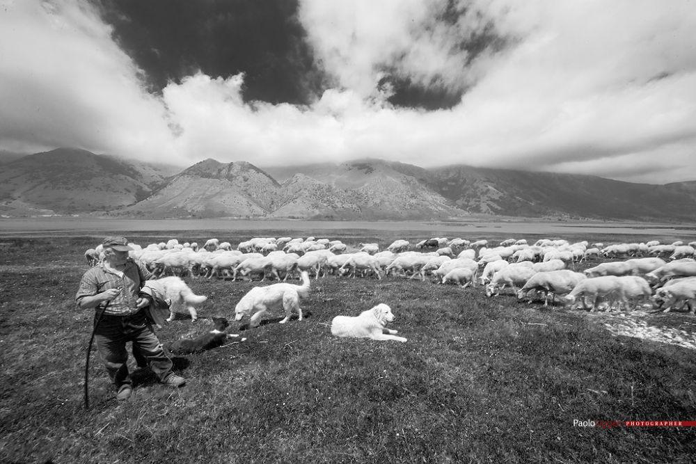 lago matese con pastore e gregge by Paolo Liggeri