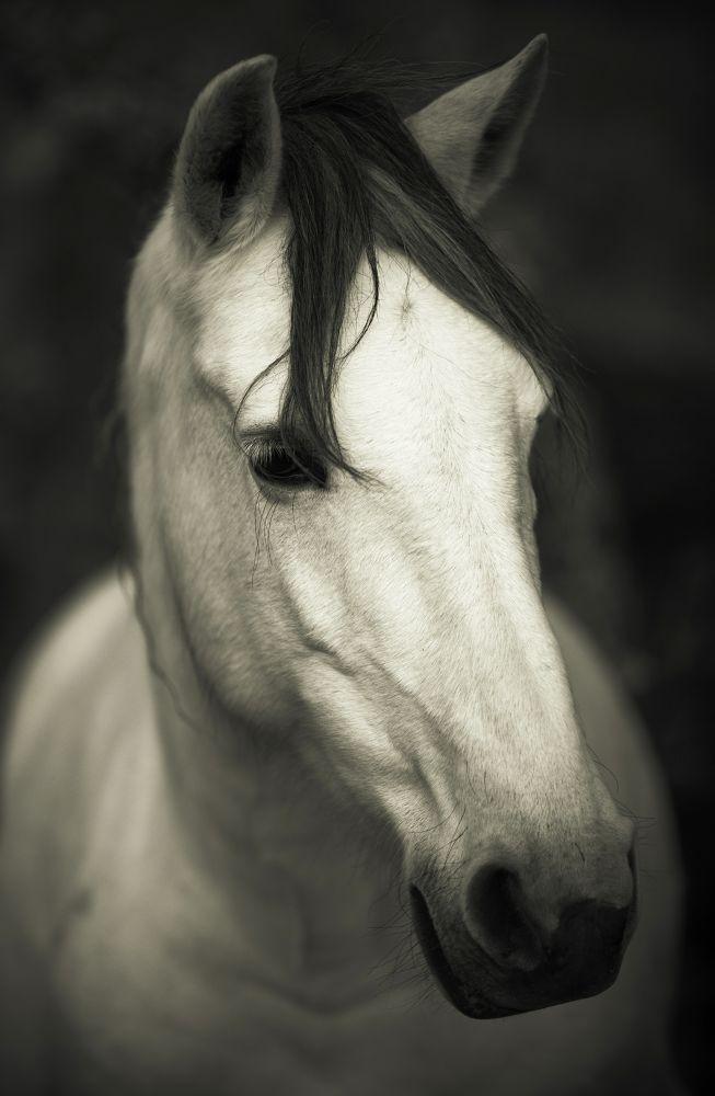 Horse portrait by José Alonso