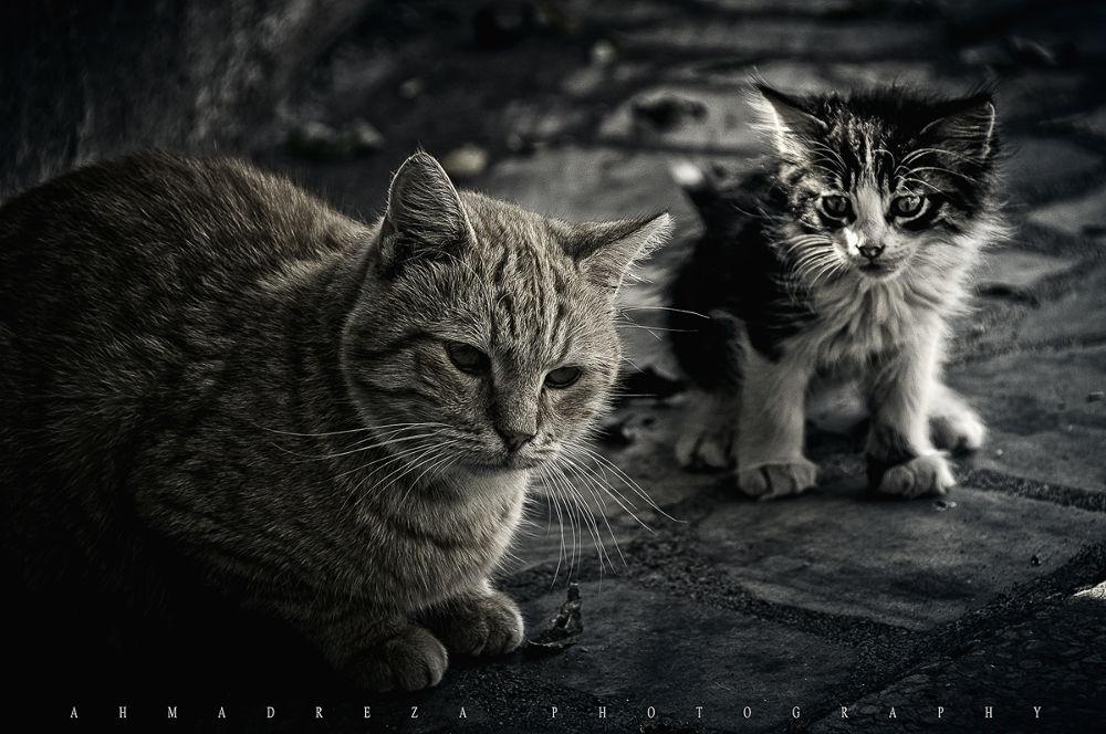 DSC_2948.jpg by ahmadreza nikazar