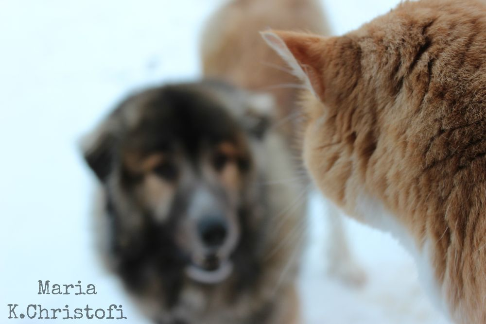 Cat and dog by MariaKristina