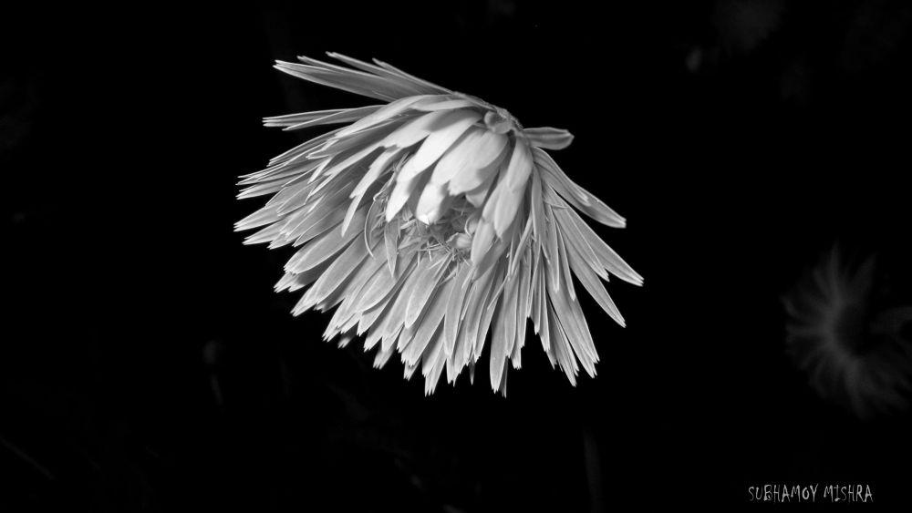flower by subhamoy mishra