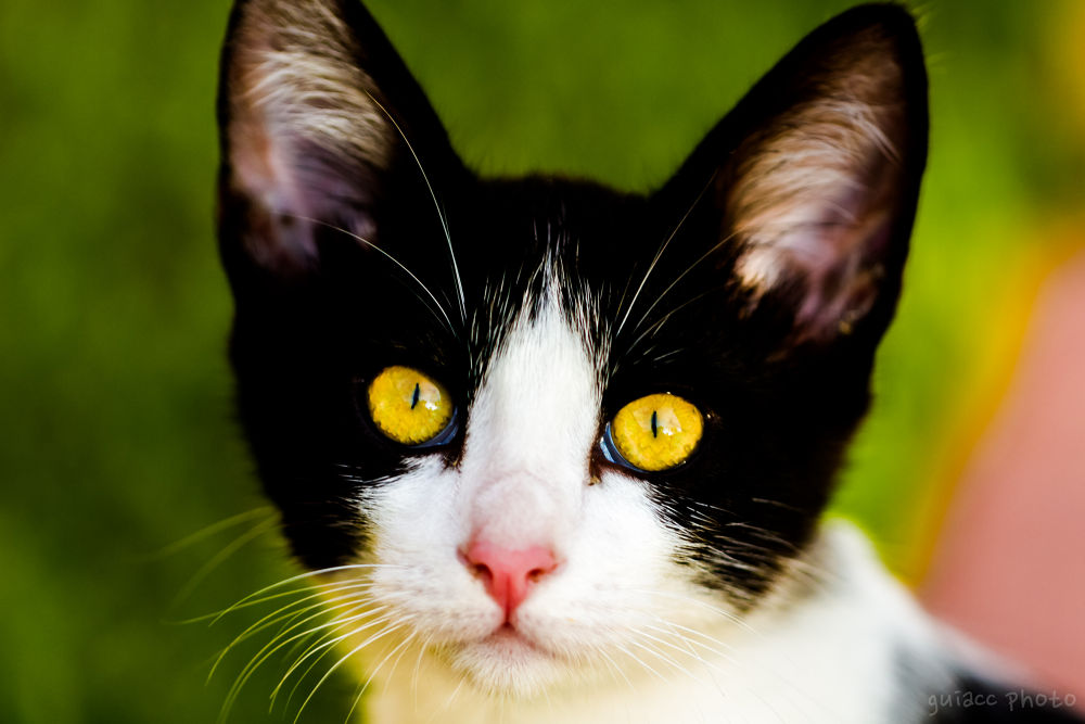 Photo in Animal #cat #eye #yellow #hypnotic #nature