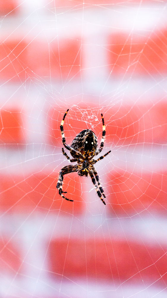 Photo in Animal #spider #insectes