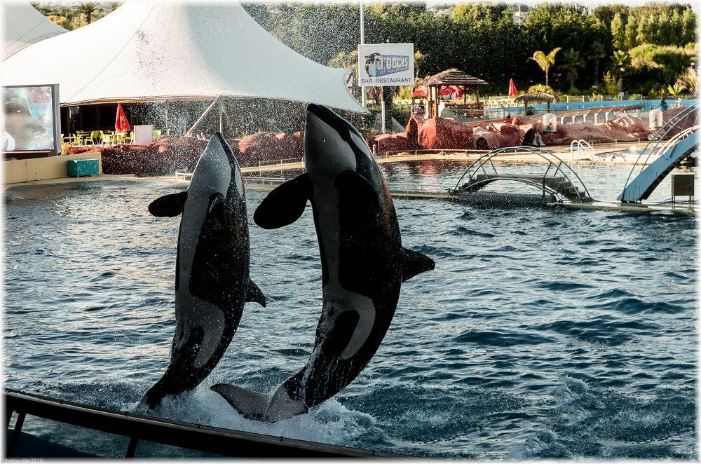 Orques.... by photosdan