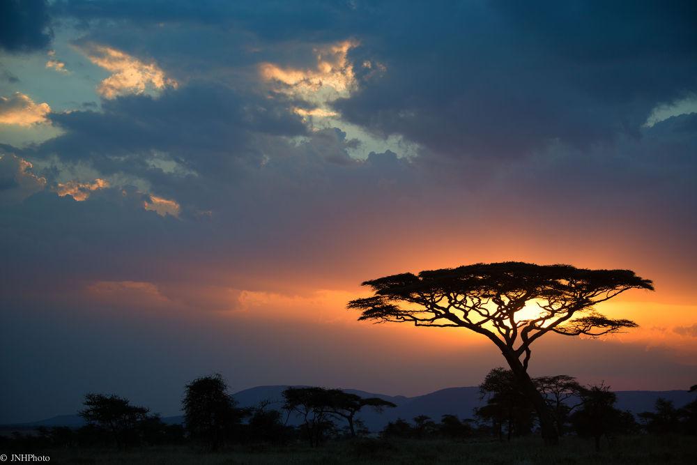 Africa 2013 by jnhphoto