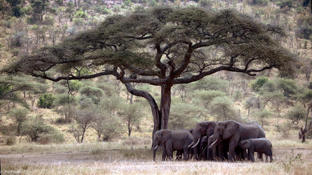 Elephants by jnhphoto