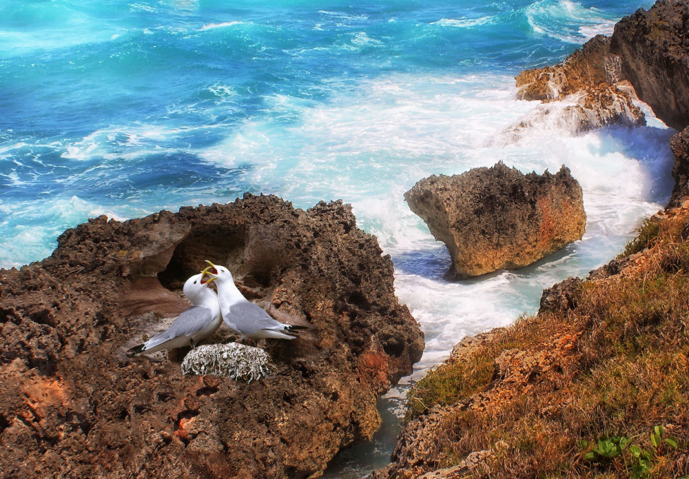 Nestling by the Sea.jpg by Jorge Coromina