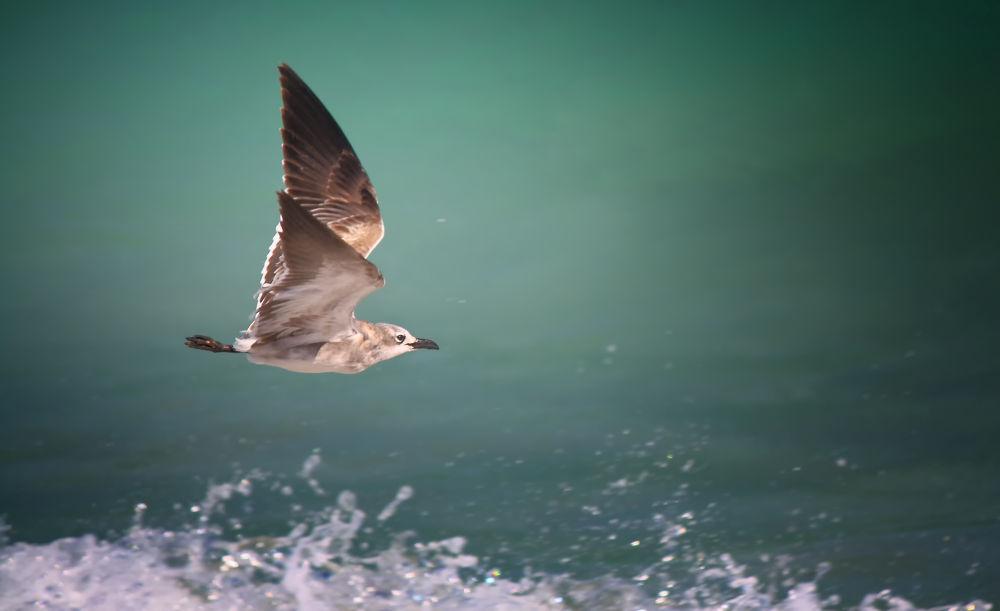 Photo in Random #seagull #gull #bird #bird in flight #flying bird #flight #gliding bird #animal #wildlife #nature #sea #waves