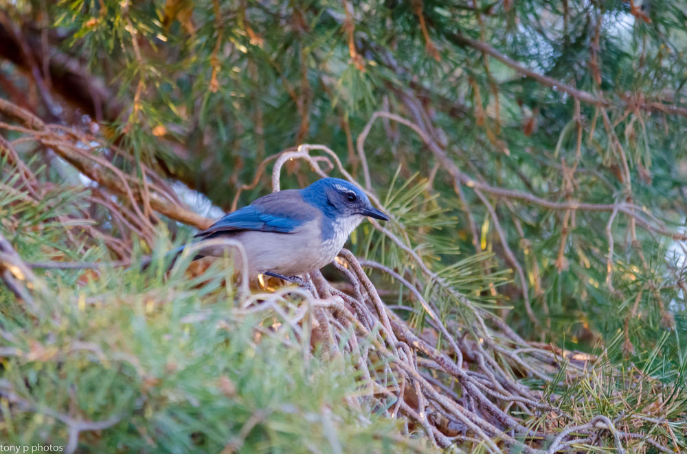 Photo in Nature #tonyp photos #birds #nikon