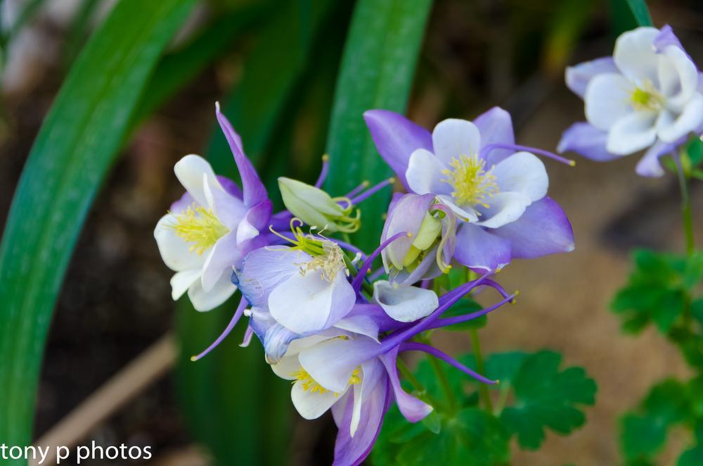 Spring Flowers by klarkaston
