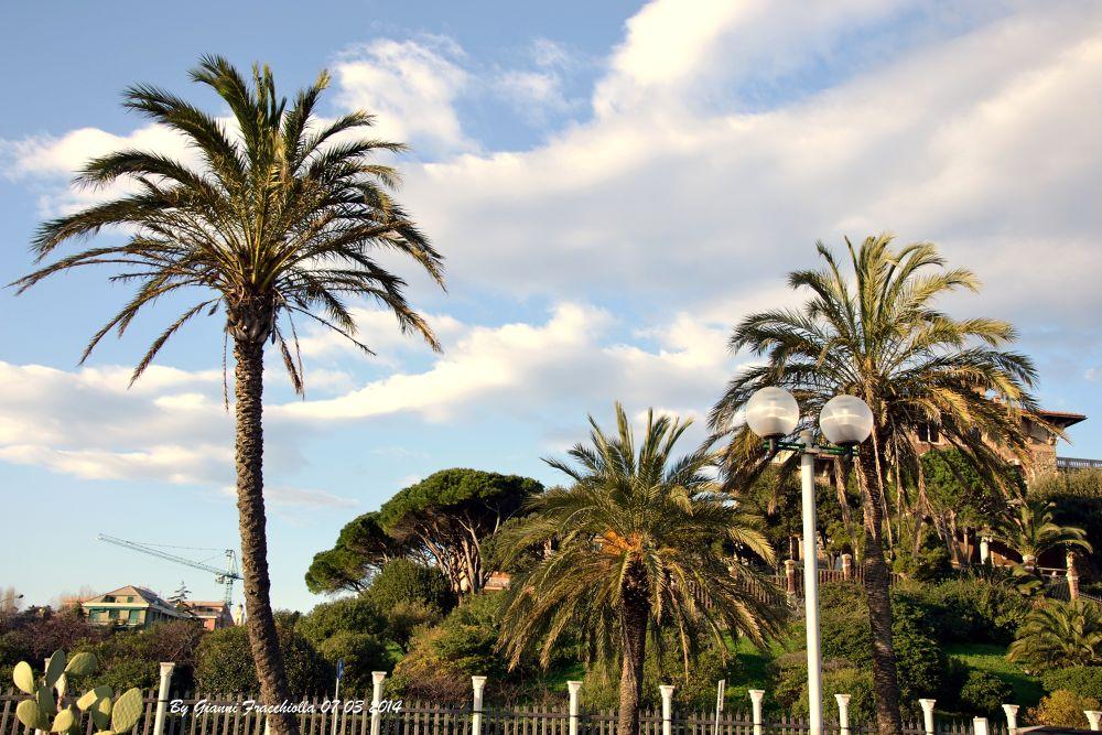 PALME IN CORSO ITALIA by jonny