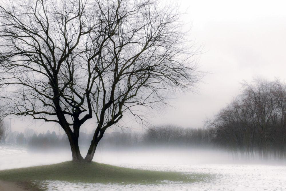 Mattino d'inverno by Francesca